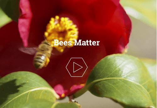 bee matters