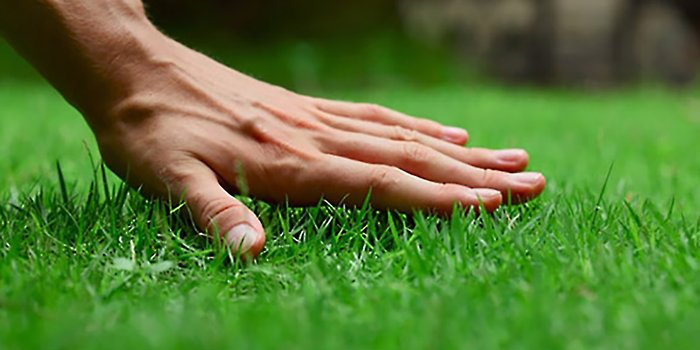start lawn care landscaping business